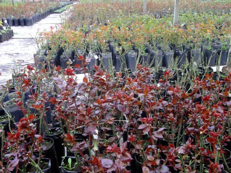 Залог успешного выращивания скрыт в правильном выборе посадочного материала