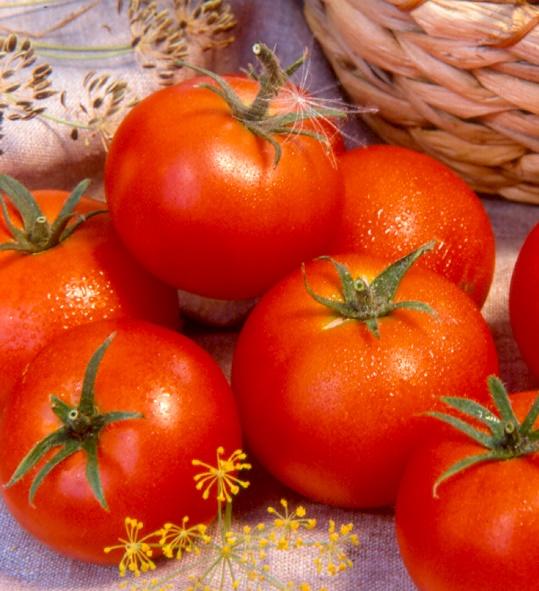 Если начинать выращивание с посева семян, то томаты данного сорта дают урожай уже через 105 дней после всходов