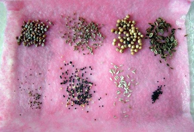В январе выполняется подготовка семенного материала