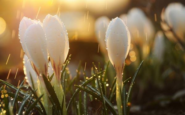 Если в марте много дождей, в мае будет много цветов