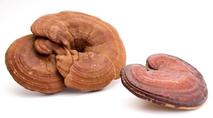 В химическом составе гриба линчжи присутствуют микроэлементы, полисахариды и органические кислоты