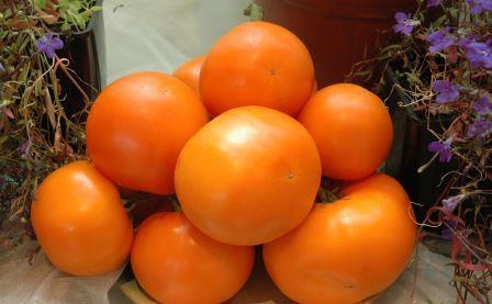 Любой огородник старается выбрать для своего участка урожайные помидоры