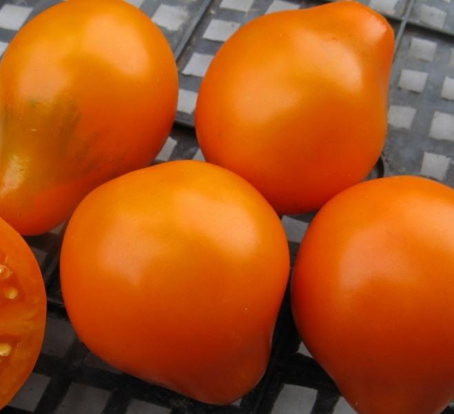 Необходимо отметить: голландские селекционеры предлагают большое количество помидорных сортов, которые способны давать более 20 кг товарных овощей с 1 м²