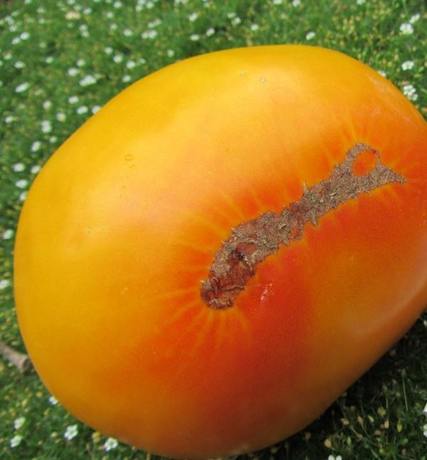 Помидоры нужно кушать в свежем виде или делать из них быстрые летние салаты