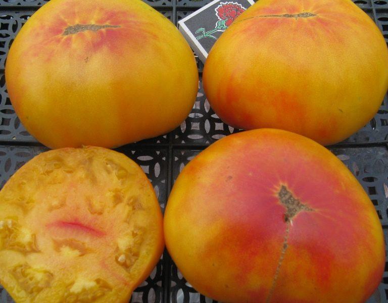 Посолить или замариновать томаты не получится, так как они очень велики по размеру