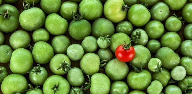 Среди зеленых помидор кладут пару штук уже спелых, так как не без оснований считается, что соседство с дозревшими стимулирует покраснение неспелых