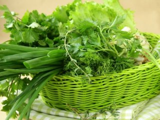 Зелень можно выращивать круглый год