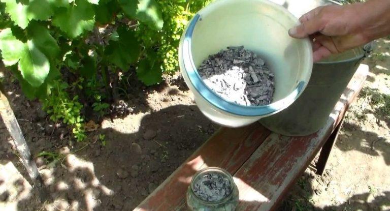 Древесная зола используется не только как удобрение. Она служит отличным средством в борьбе с многочисленными болезнями и вредителями