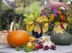 В октябре сад следует подготовить к первым заморозкам