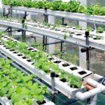 Выращивание лука как бизнес рентабельность 57