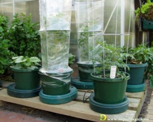 Парник своими руками: как сделать, на гидропонике, выращиват.