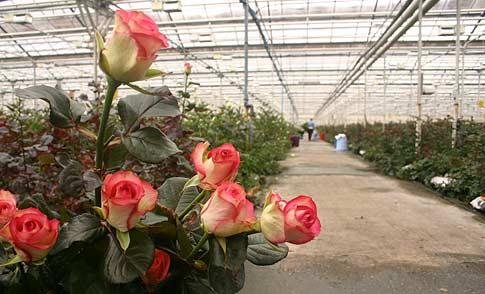 Как заработать выращивая зимой цветы фото и видео 101 способ заработать в интернете книга