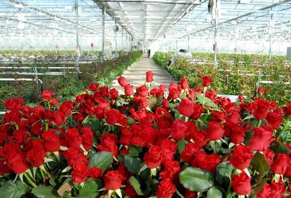 сегодняшний день выращивание цветов круглый год в открытом грунте производства термобелья